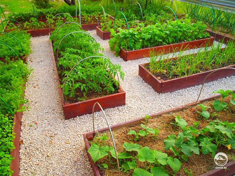 Наши сады