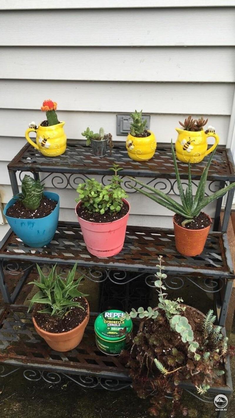 Мои кактусы и суккуленты