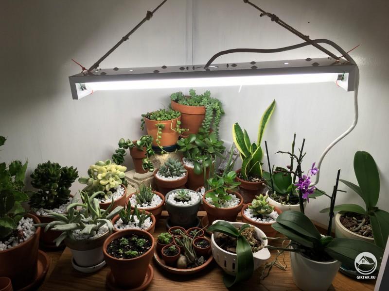 Моя коллекция суккулентов и орхидей